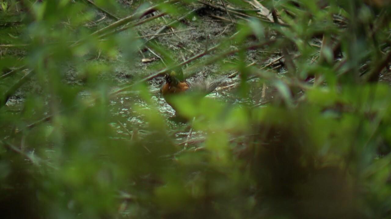 bird illness 4.jpg