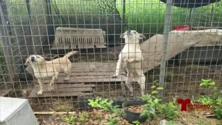 crueldad de animales 0131.jpg