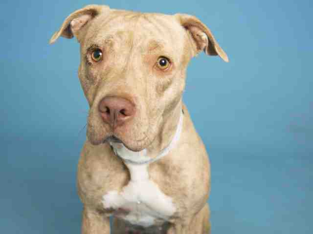 Pets available for adoption from Arizona Humane Society and Maricopa County Animal Control (1/17)
