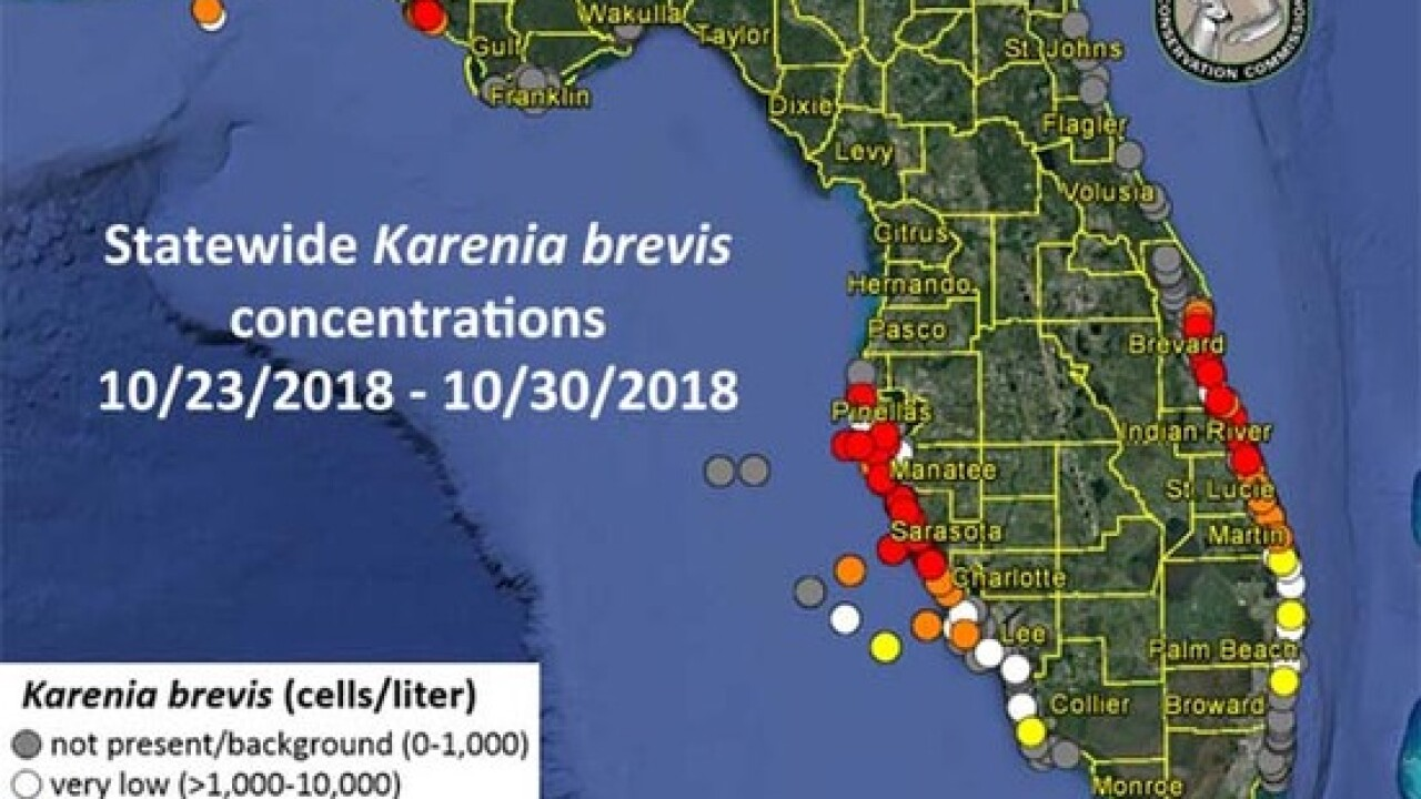 Low levels of red tide have spread to Pensacola Beach