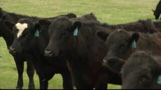 Montana Ag Network: US Cattlemen's Association brings priorities to DC