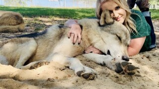 Seacrest Wolf Preserve, educating the public about wolves to preserve them for generations to come