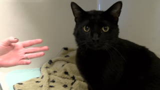 Pet of the Week: Thorin