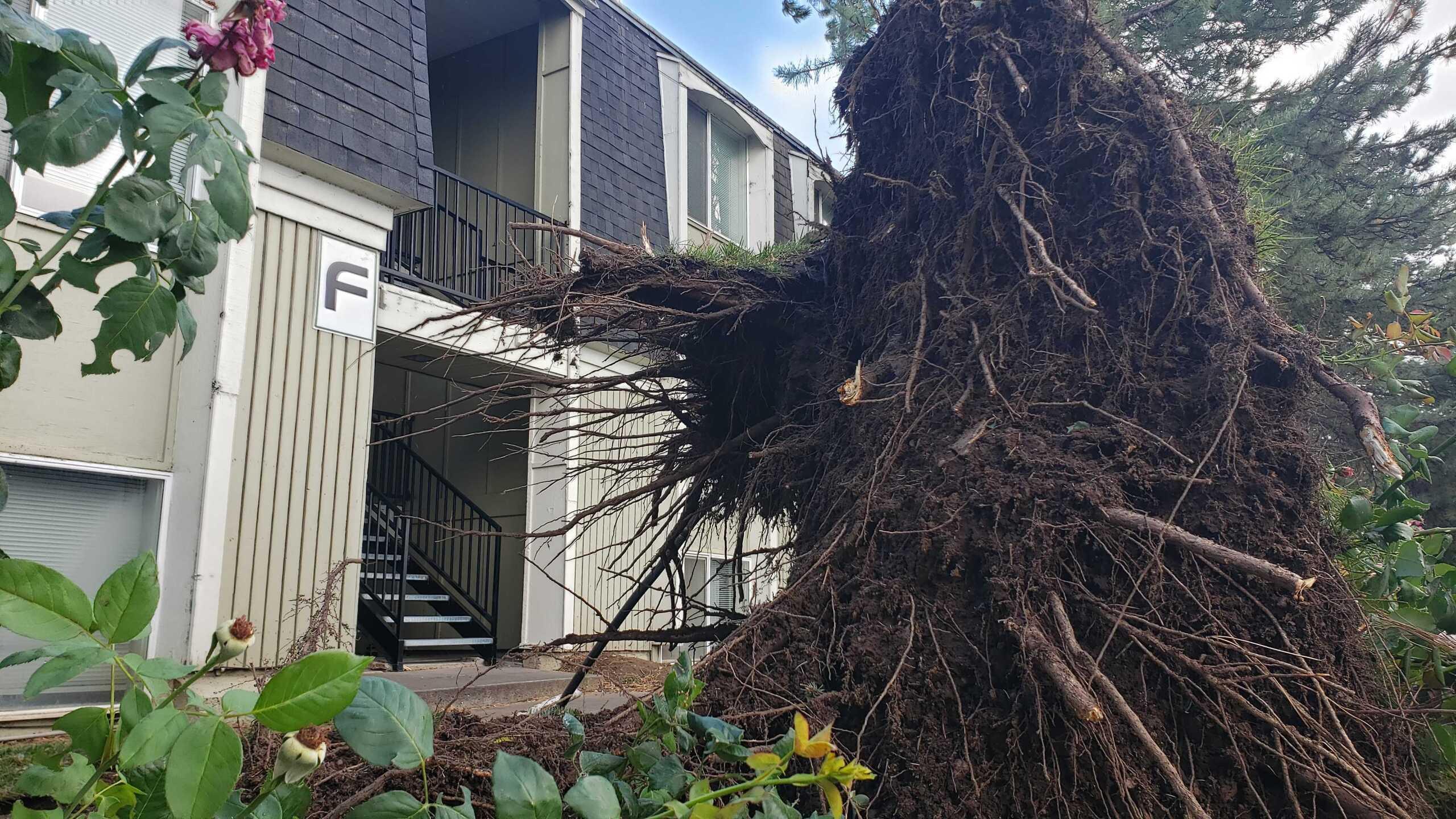Wind Damage in Ogden (1).jpg