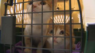 RAW - Humane Society 80 Kittens Dan B_frame_29513.png