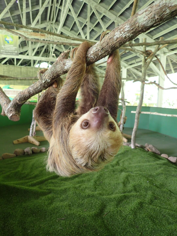 Baby Sloths (27).JPG