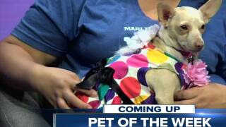 Meet our 23ABC Pet of the Week, Ella!