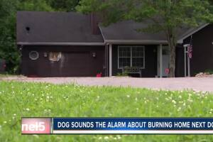 Rescue dog sounds alarm to neighbor's burning home