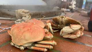 Central Coast Living: Giovanni's Fish Market serves local crab from tank-to-table