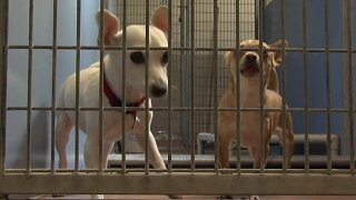 Solana Beach City Council approves animal services contract with San Diego Humane Society