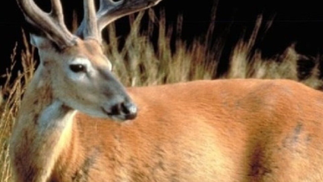 Wisconsin's 9-day deer hunt begins Saturday