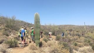 trails1.jpg