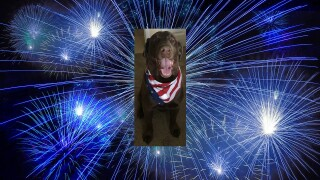 Fourth of July safety for pets: How to keep Fido happy and secure amid the celebration