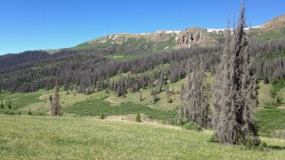 Beetle kill in southern Rocky Mountains