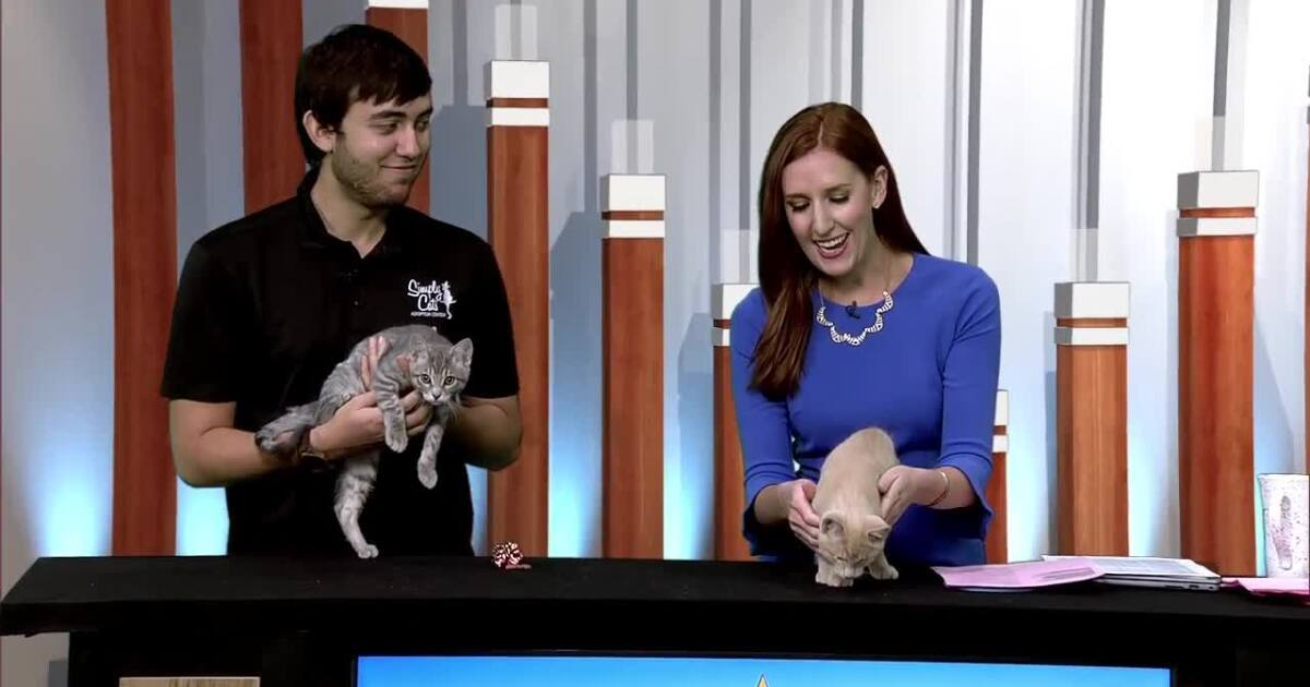 Simply Cats offering Free Fridays to find homes for kittens