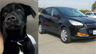 UPDATE: Dog taken during Great Falls car theft found safe
