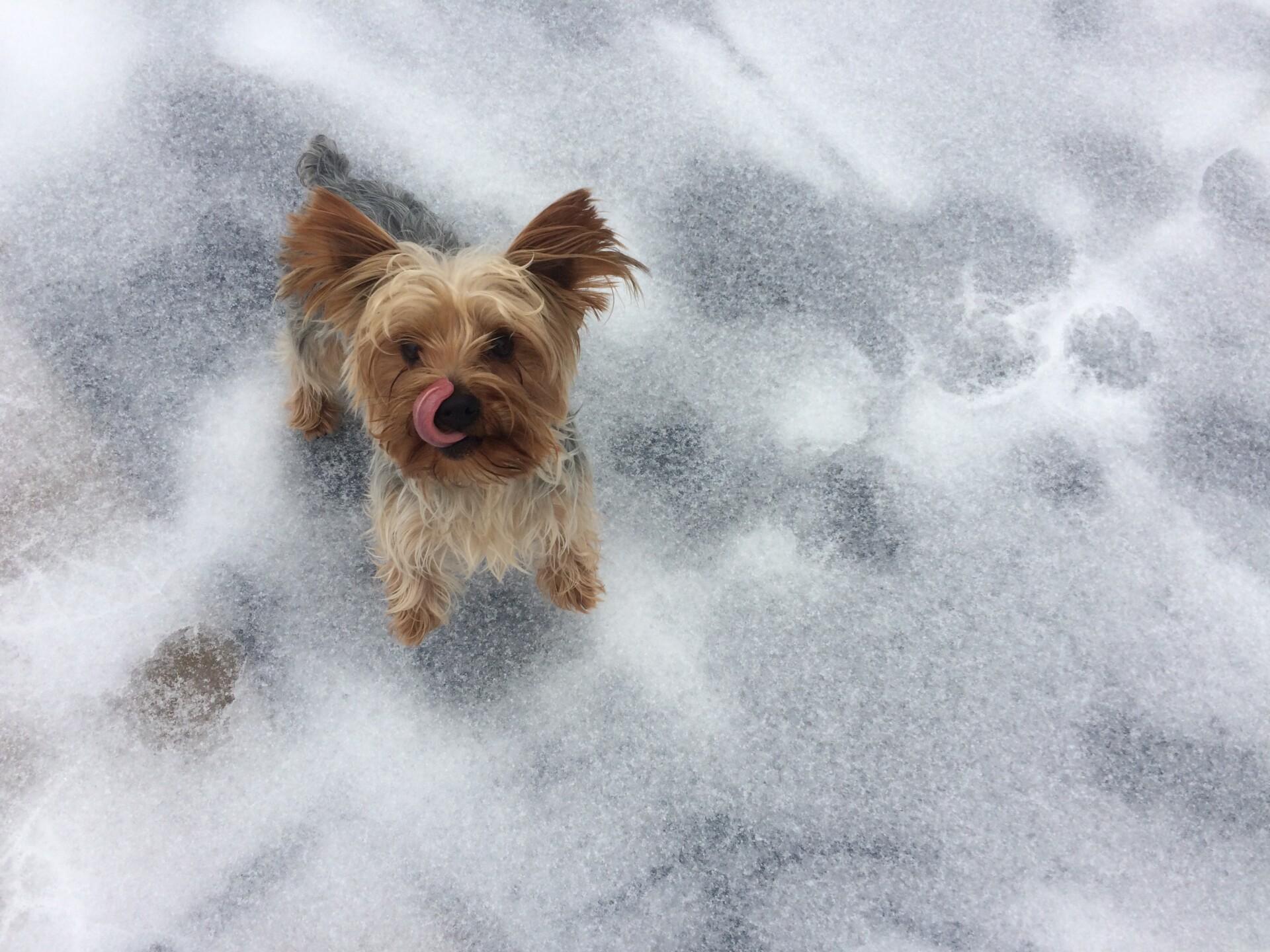 Photos: Share your snow photos! (Part2)