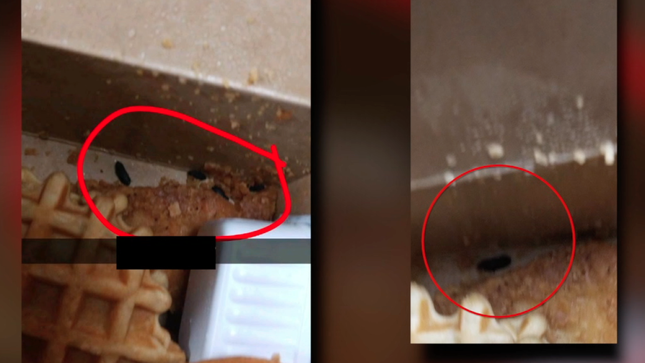 Mouse droppings discovered in Mira Mesa High student\'s lunch