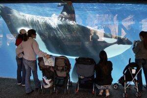 SeaWorld ends orca breeding