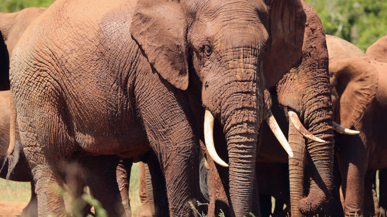 Conservationists plan to relocate 500 elephants in Malawi