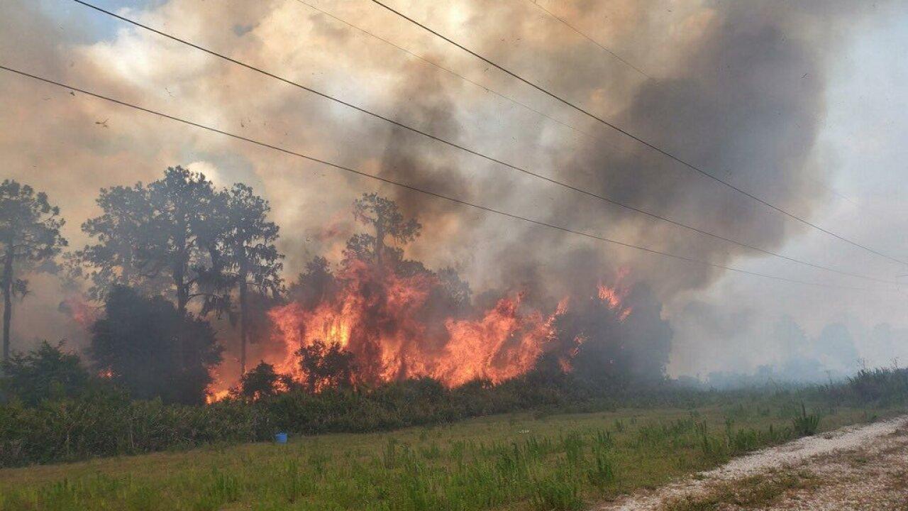 brush fire2.jpg