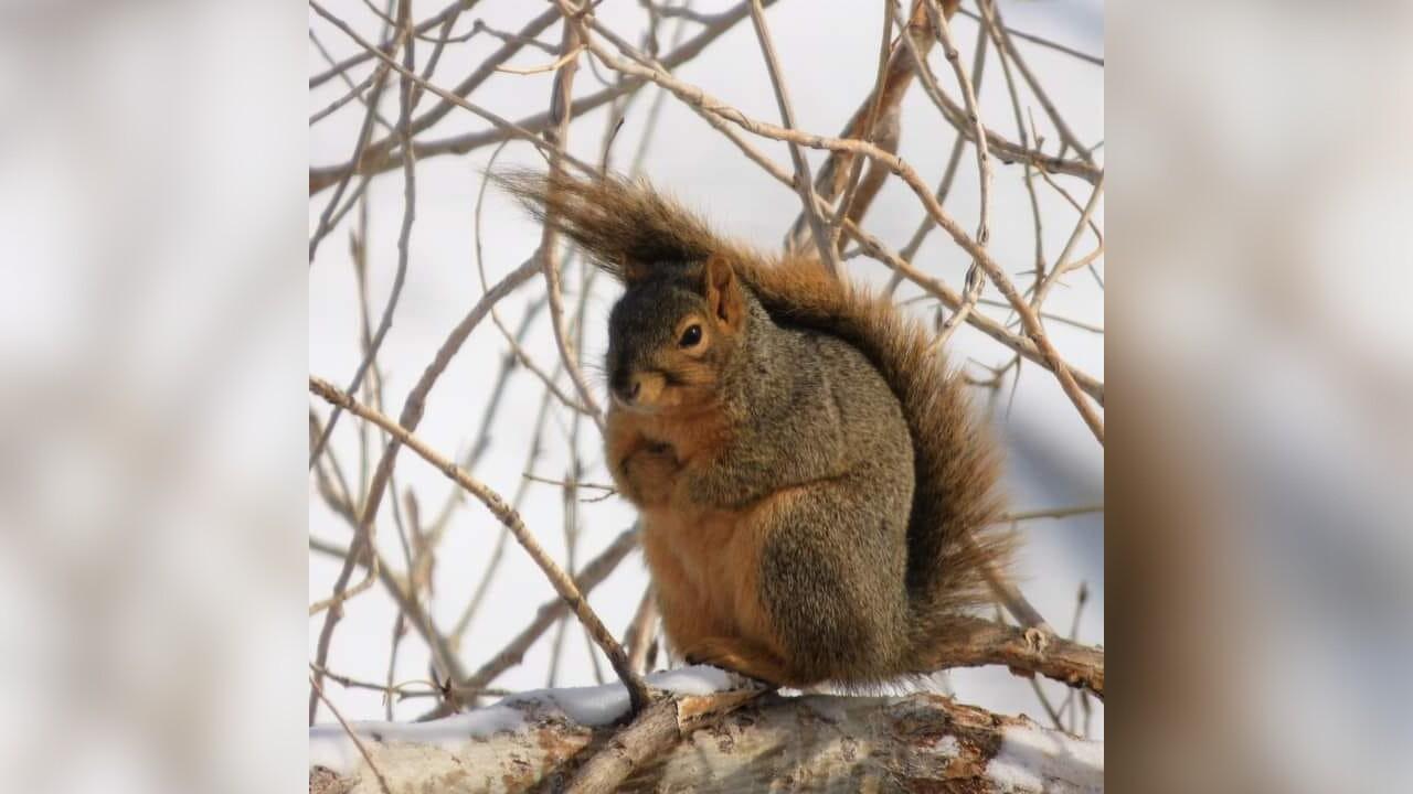 Squirrel Jutta Marianne.jpg