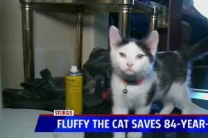 Cat saves man's life after fall