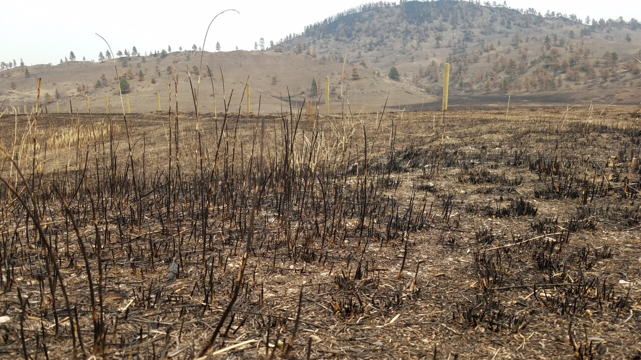 Raging North American wildfires forcing prioritization of resources