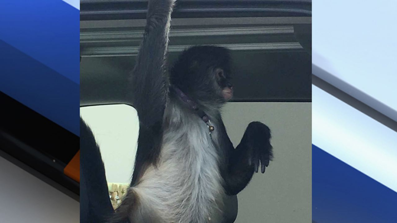 Home Depot worker attacked by monkey in Florida