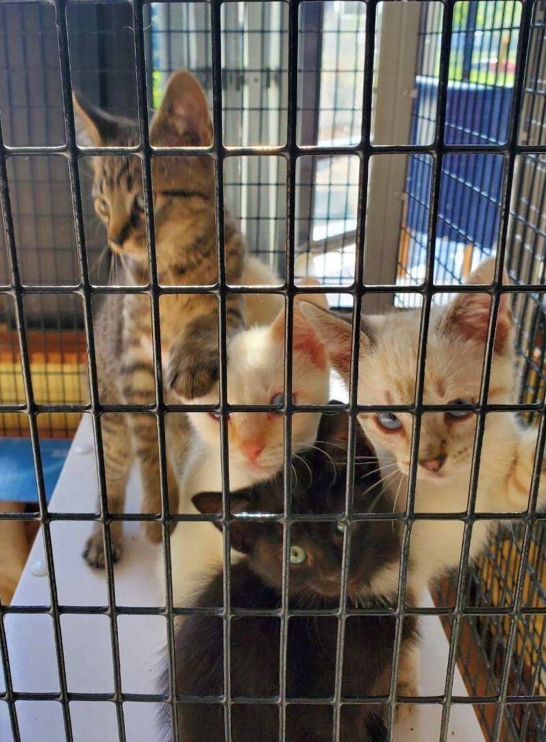 Kittens 5.jpg