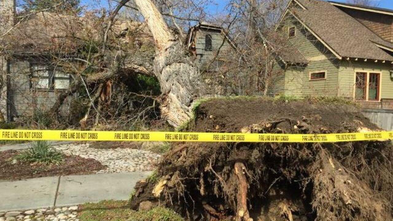 Tree falls onto Boise house