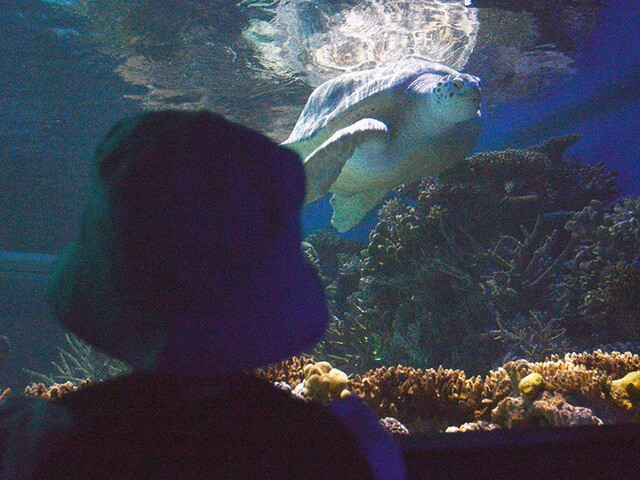 Proton princess gets special day at Aquarium