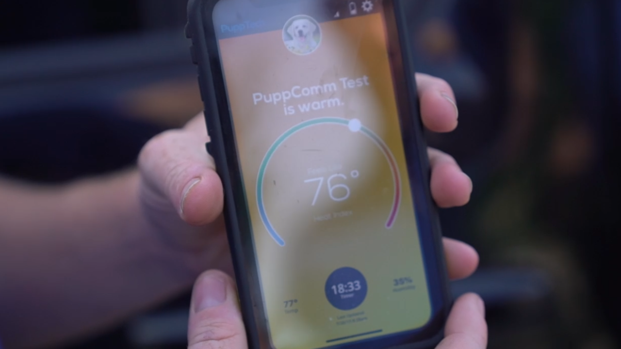 New tech could help keep pets safer—and more comfortable—in a hot car