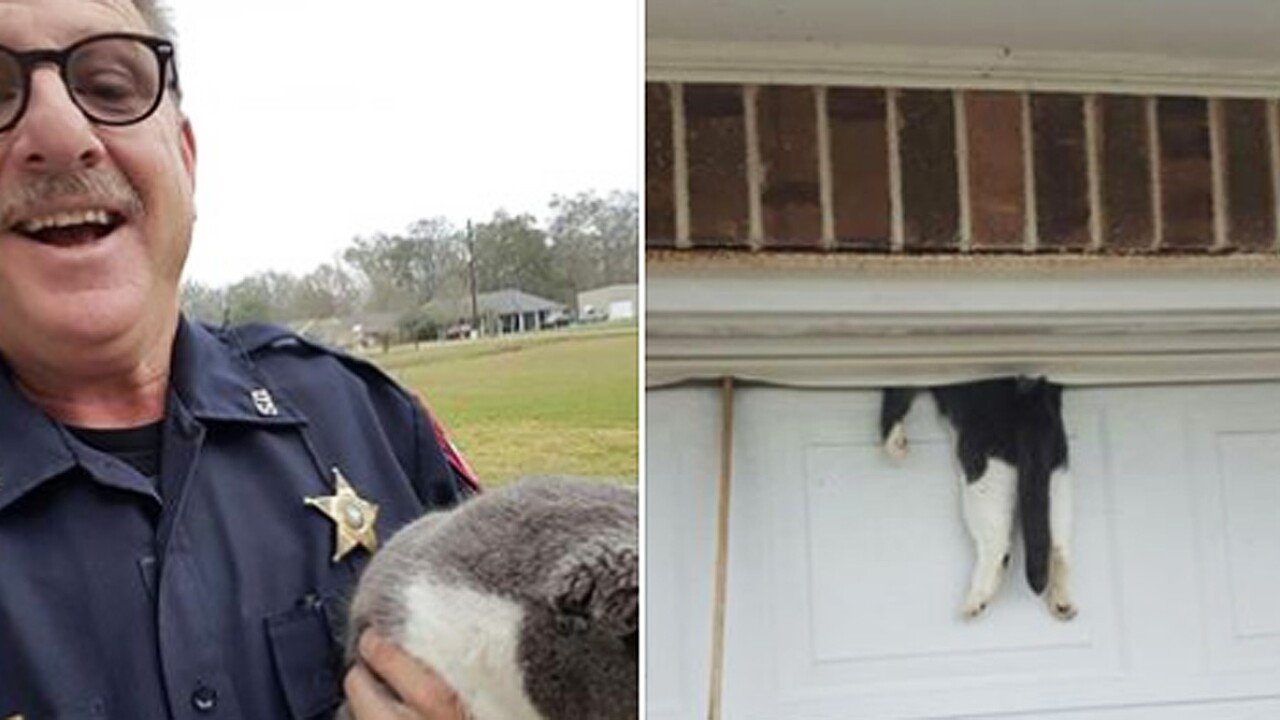 Deputy saves cat trapped in garage door