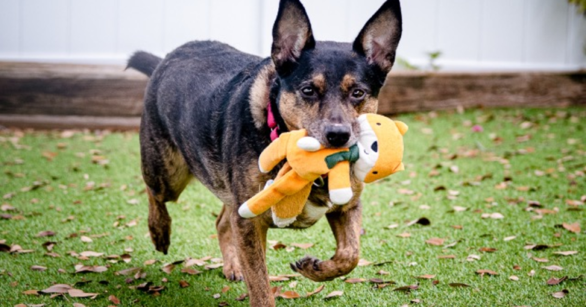Pet of the week: Elsy wants a home where she can play with toys