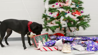 This Video Of Shelter Dogs Picking Out Their Own Presents Will Melt Your Heart