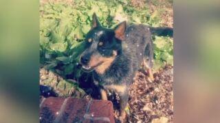 Dog Accidentally Euthanized.JPG