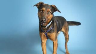 AZ Humane Society half off adoptions