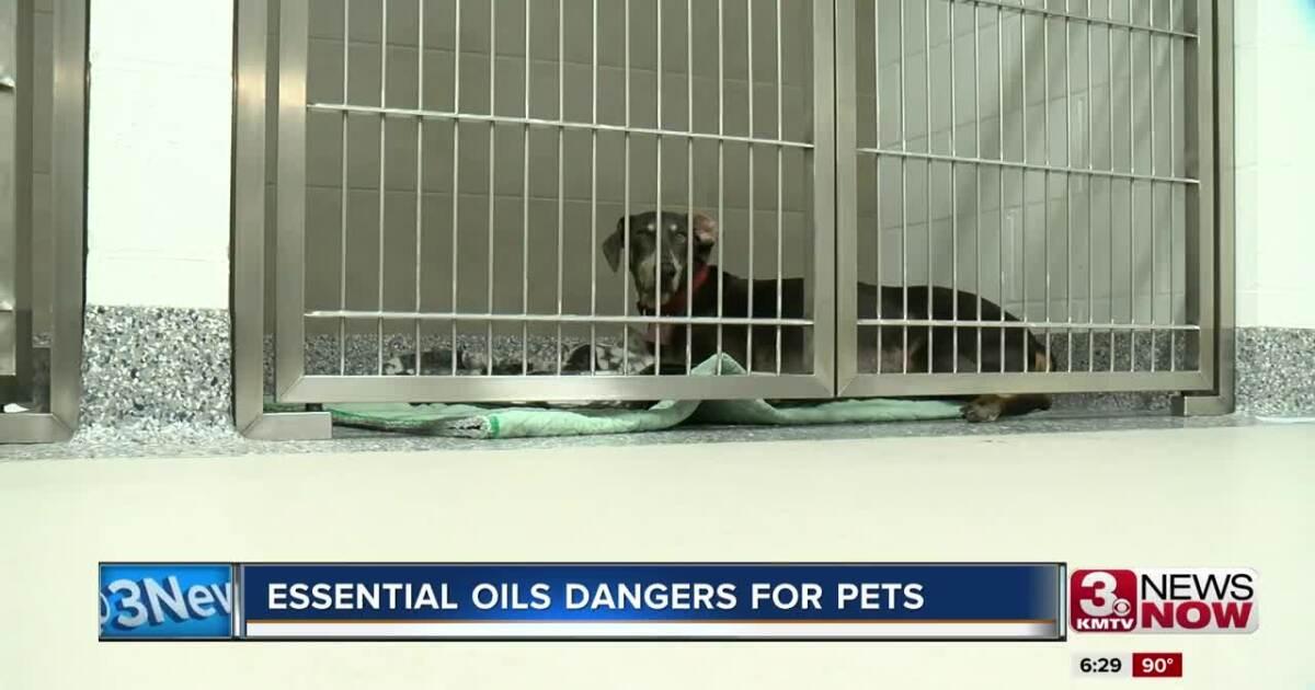 Essential oils dangers for pets