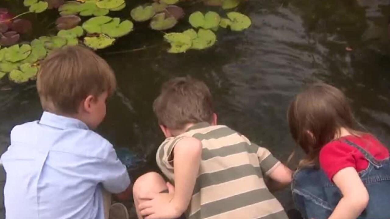 School Patrol: Discovery Center Lily Pond