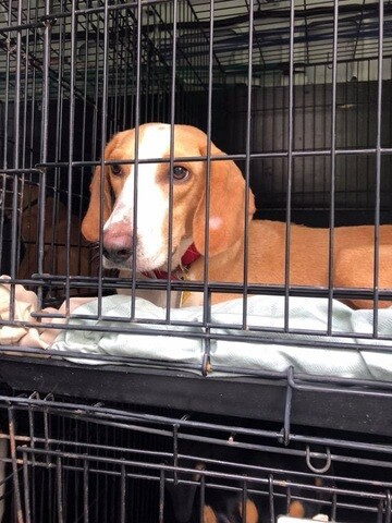 Hurricane dogs transported to Maryland