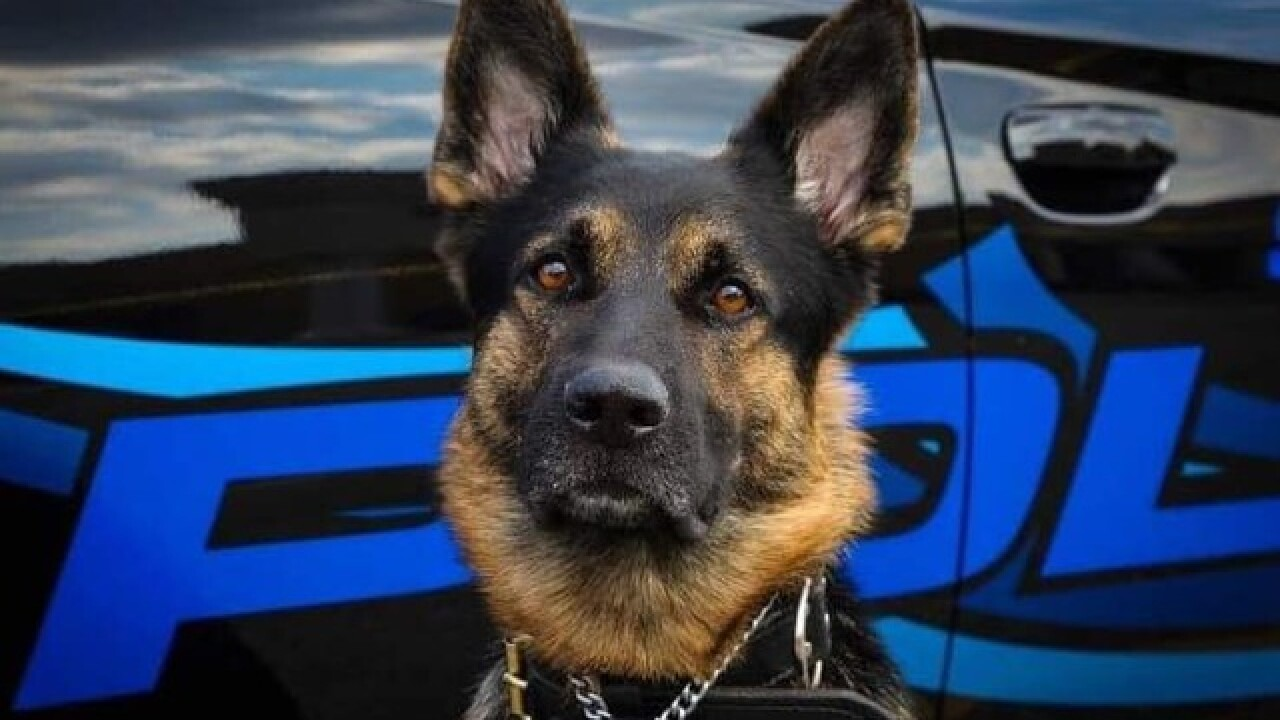 K-9 dies after police-involved shooting