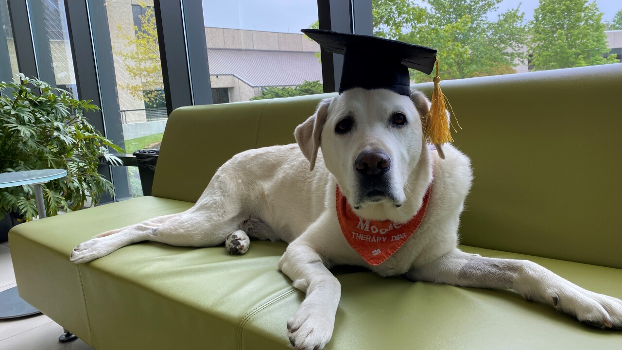 Virginia Tech awards therapy dog honorary doctorate degree