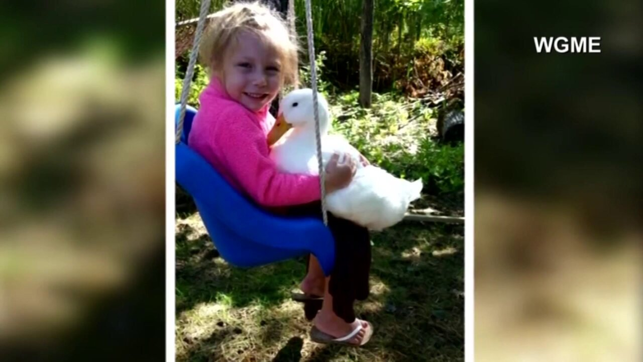 'Love at first sight' says dad of girl, pet duck's special bond