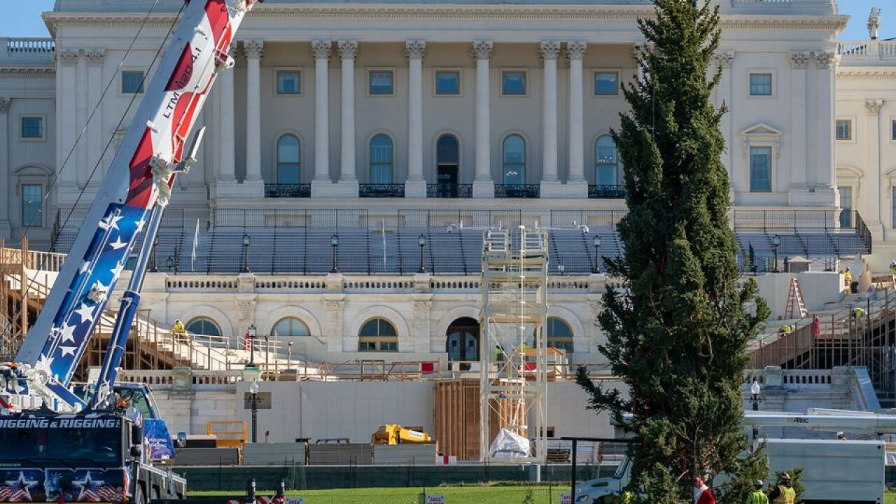 US Capitol Christmas tree to be lit without spectators