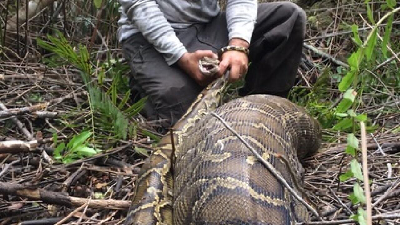 Scientists amazed when python regurgitates deer