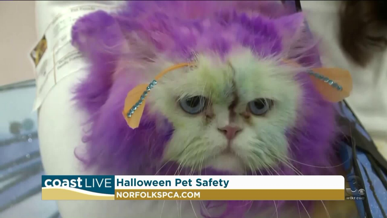 Some surprising ways Halloween can be scary for our pets on Coast Live