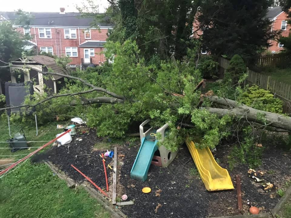 Trees down in North Baltimore