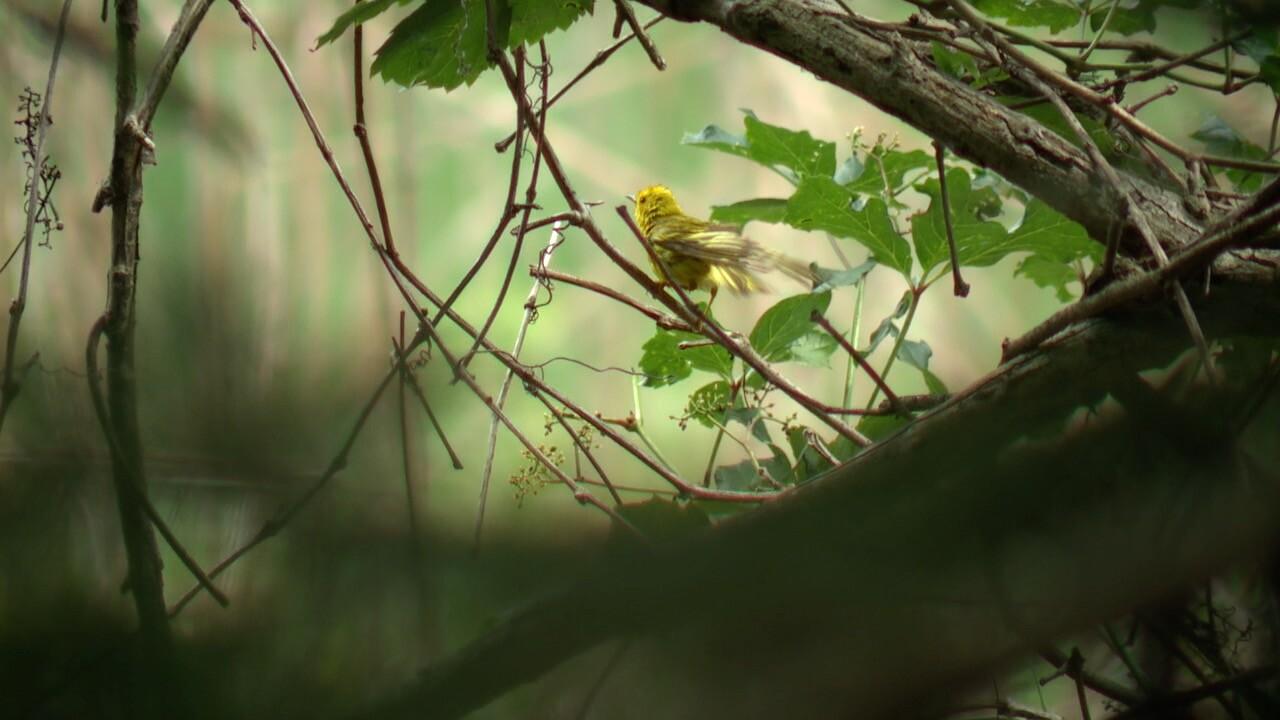 bird illness 3.jpg