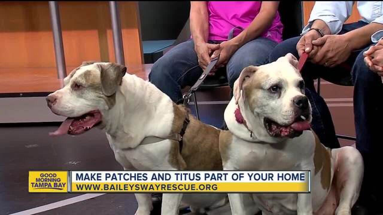 On National Dog Day, give mom and son duo a home